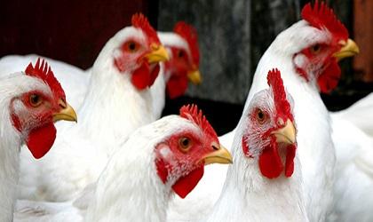 Allarme influenza aviaria a Tivoli ea Roma