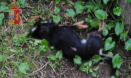 Orrore ai Castelli, spara al cane che gli uccide le galline