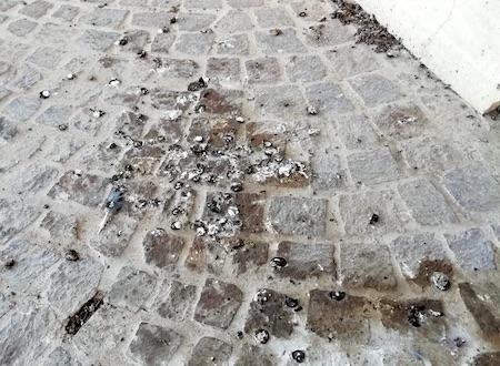 guano cimitero ciampino ilmamilio