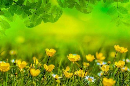 primavera5 ilmamilio
