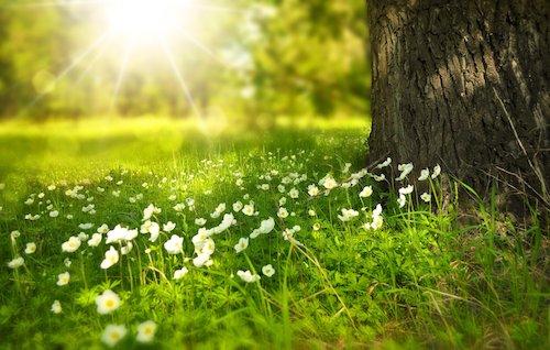 primavera4 ilmamilio
