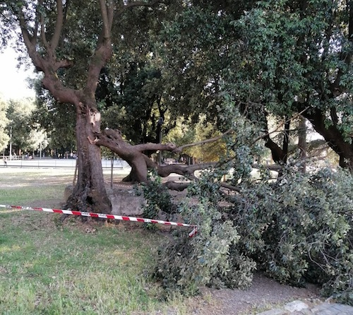 albero caduto villa frascati ilmamilio