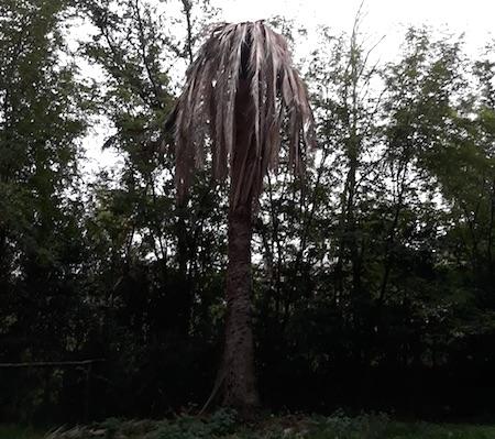 palme villaSciarra2 frascati ilmamilio