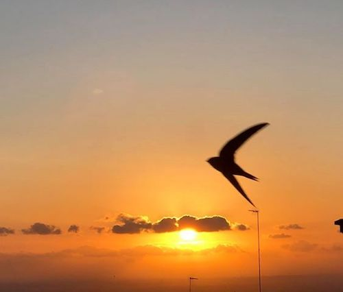 tramonto frascati rondine