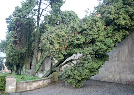 albero caduto5 genzano ilmamilio