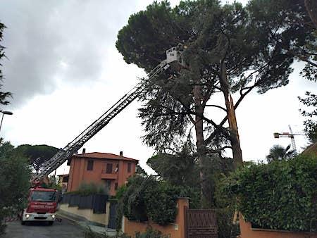 albero caduto pedica grottaferrata ilmamilio
