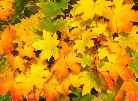 foglie ilmamilio