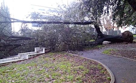 albero caduto velletri5 ilmamilio